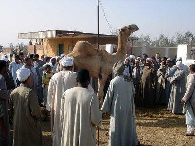 mercado camellosjpg