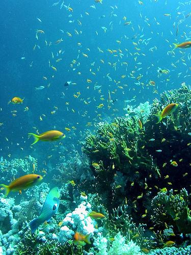fondo-marino.jpg